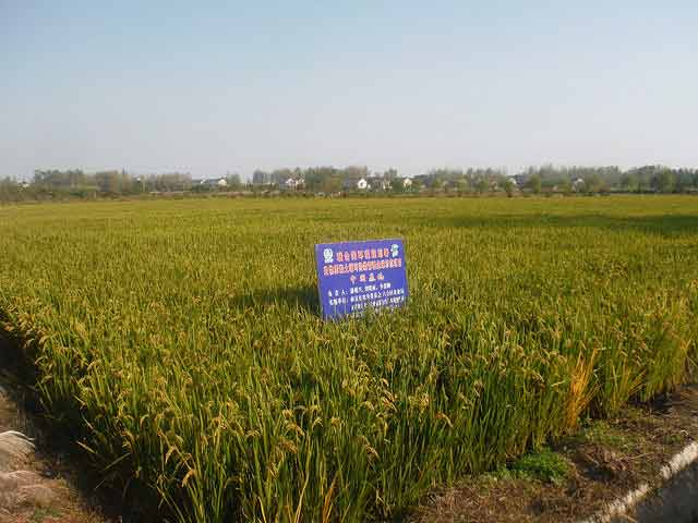 Biochar applied at 15-20t-ha in China