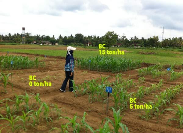 Beneficial effect of biochar on acidic soils in Sumatra.